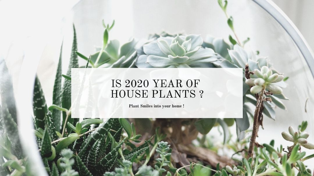 Is 2020 the year of house plants ?