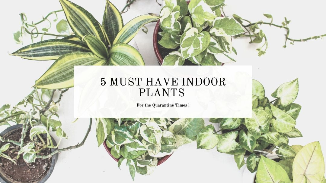 Easy indoor plants to grow at home