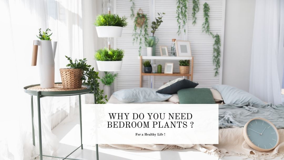 importance of bedroom plants