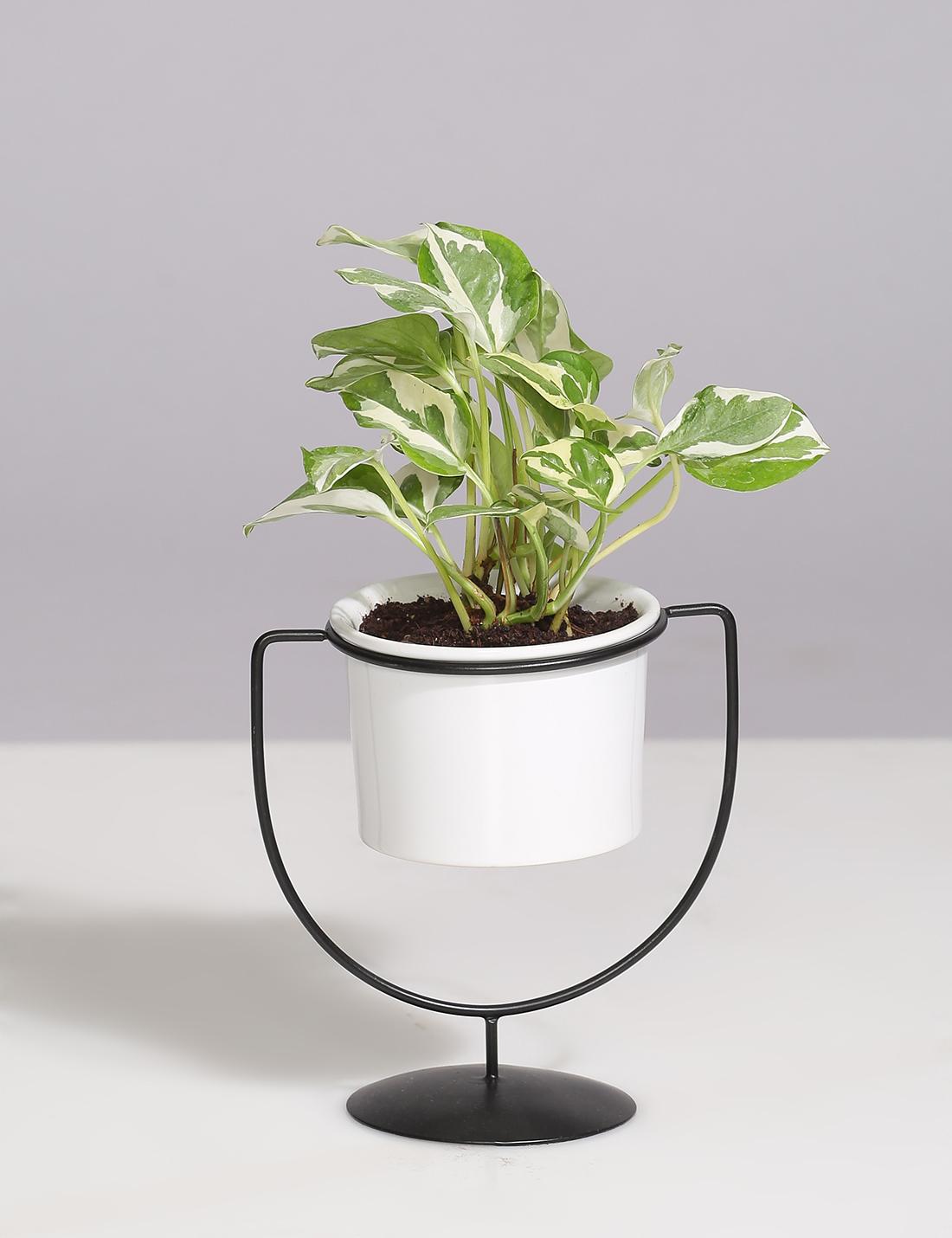 Ceramic Planter With Cup Shaped Metal Stand