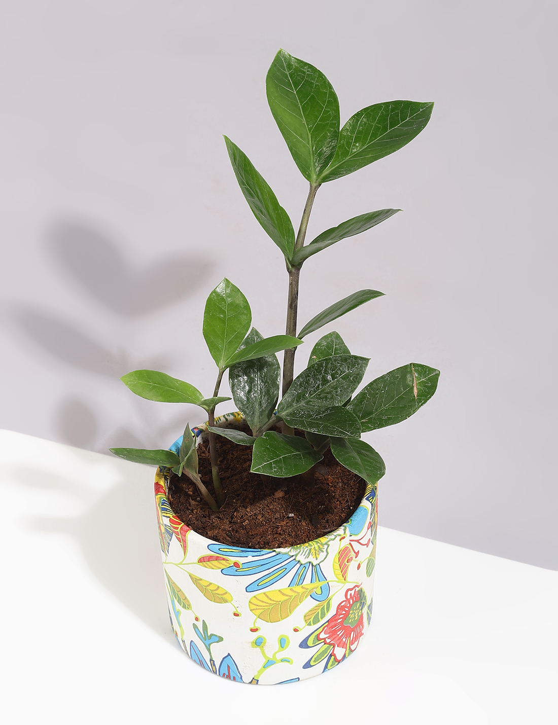 Zamia Plant In Handcrafted Printed Pot
