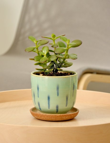 Dew Drops - Handcrafted Succulent Pot