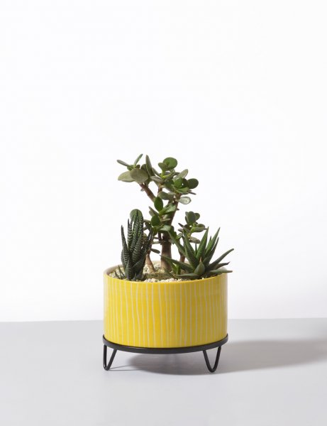 Calvin - handmade Ceramic pot / Pop Yellow